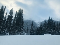 between Golden BC and Revelstoke BC Canada  - endless christmas