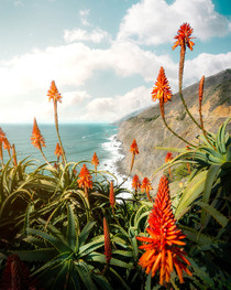 Big Sur in the spring from a couple months ago this year OC  the_californist