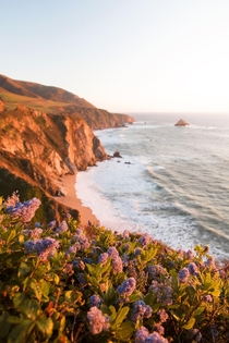 Big Sur  Superbloom