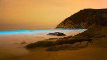 Bioluminescence Pacifica California