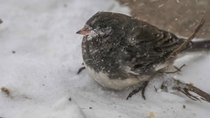 Birds are not loving life too much right now in Minnesota Extreme winds and very low temperatures do not mix well