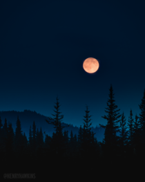 Blood moon rising over a foggy forest in Nordegg Alberta