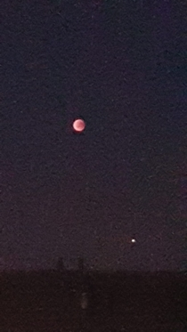 Bloodmoon   jupiter taken with mobile