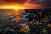 Blooming emotions Sunset at Snaefellsnes cliffs Iceland Photographed by Blai Figueras
