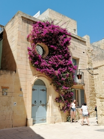 Blossoming house in the Medieval City of Mdina Malta