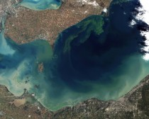 Blue-Green Algae bloom Lake Erie US