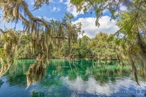 Blue Springs State Park in central Florida
