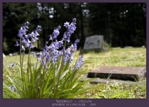 Bluebells Scottsburg OR