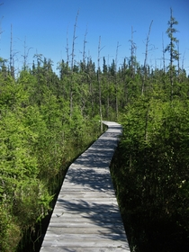 Boardwalk built over the muskeg bog on a hike in Waskesiu Saskatchewan