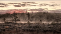 Bog in the October Mist Mukri Estonia  by Amadvr