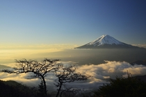 Bonsai Fuji - Majestic Mount Fuji Japan  photo by Takashi N