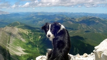 Border Collie Dog on Hill
