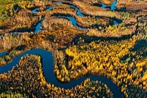 Boreal Forest and Wetland Athabasca Delta Albert