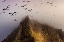 Boreray is a wild uninhabited island off the west coast of Scotland Home to a great Gannet colony it was a gloomy evening when my boat arrived but just as a bit of sunlight poked through thousands of birds flew out to meet us  Photo by Jim Richardson