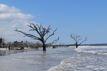 Botany Bay at low tide SC
