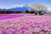Breathtaking view of Mount Fuji Japan