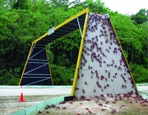 bridge made for local crab population x-post from rpics