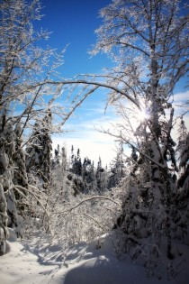 Bright blue sky and snow-covered trees