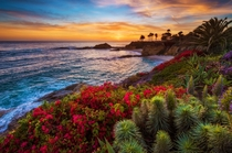 Bright flowers line Treasure Island Beach Laguna Beach CA  by Tom Bricker