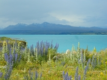 Brilliant Lake Pukaki South Island New Zealand