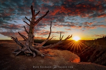 Bristlecone Pine Sunset - Ive taken a lot of pictures of this old tree over the years It overlooks a desert valley in Utah It has watched a lot of beautiful sunsets over its long life  DaveSoldanoImages