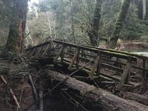 Broken bridge in Cathedral Grove British Columbia