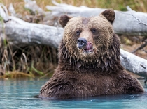 Brown Bear Lake Clark National Park Alaska photo by Rob Daugherty