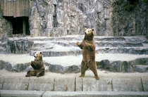 Brown Bears Ursus arctos Seoul Zoo  by Willard Losinger