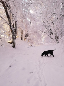 Brutus in winter wonderland Transylvania