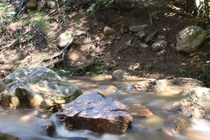 Bubbling Brook Near Pikes Peak Colorado
