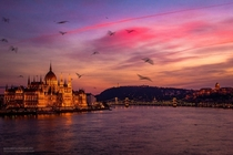 Budapest - one of the most beautiful moment hunting for  years - by Mark mervai