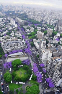 Buenos Aires during spring