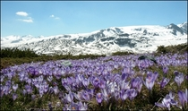 Bulgaria Rila Mountain -