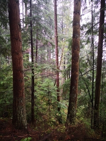 Burnaby Mountain temperate rainforest BC