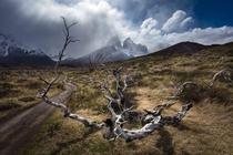 Burned Tree In Torres Del Paine National Park Chile  xpx