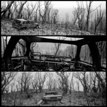 Burnt car and regrowth after the Australian bushfires OC
