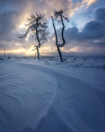 Burnt trees in a magical snow covered landscape High Fens Belgium