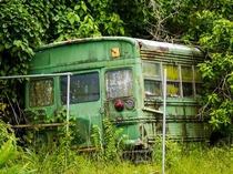 Bus being taken over by nature in Belize