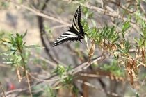 Butterfly at Century Lake Santa Monica Mountains Ca