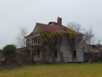 Butterscotch Jasmine in bloom on abandoned house Outside of Tarboro NC Bonus Buzzard on the chimney