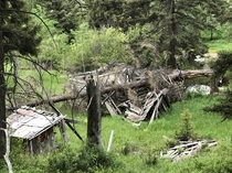 Cabin crushed by tree in Montana mountains