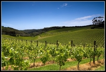 Cable Bay Vineyard in New Zealand