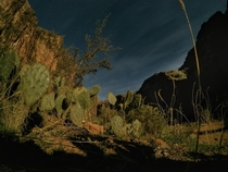 Cacti at night in Carbonate Canyon Havasupai Reservation AZ
