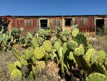 Cacti live here now - on the Texas Mexico border