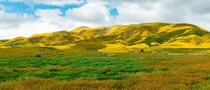 California Super Wildflower Bloom in San Luis Obispo County California