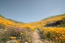 Californias recent super bloom reminds me of What Dreams May Come