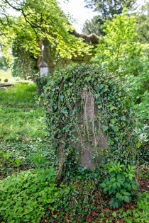 Came across a small abandoned stone church where all the tombstones were covered in ivy  x