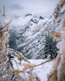 Came for the larches stayed for the snow North Cascades WA