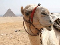 Camel in Egypt And behind me to my right youll see this lovely pyramid