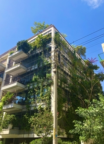 Can you please make more of these Imagine a whole neighborhood covered in plants like that  Tel Aviv Israel